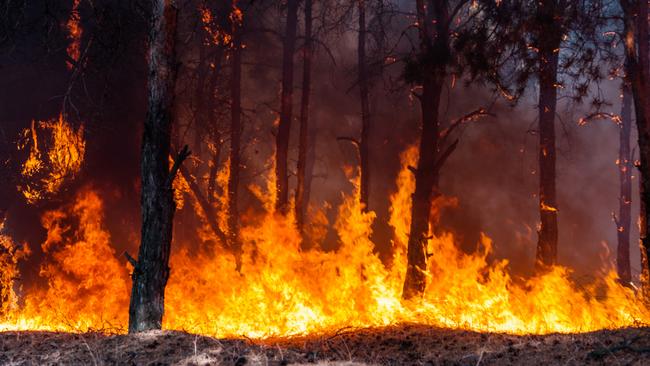 Công nghệ giúp phát hiện và cảnh báo cháy rừng sớm - ảnh 1