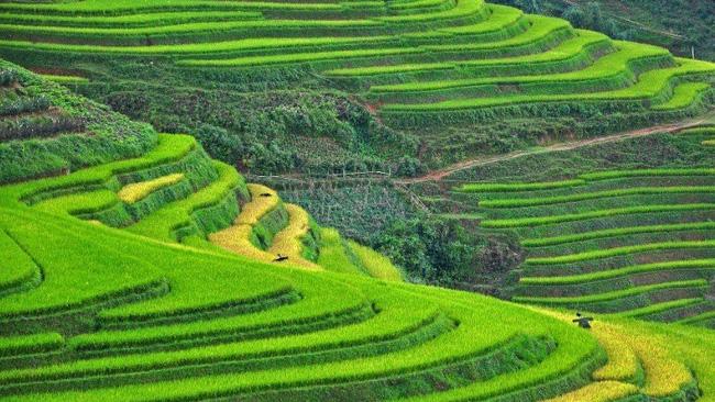 Sapa's terraced paddy fields on TripstoDiscover