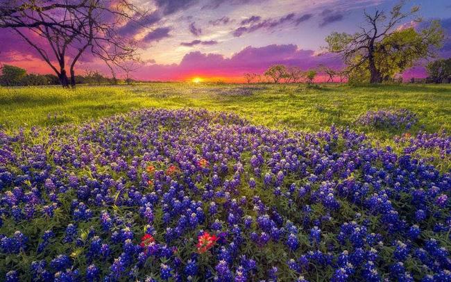 Ngất ngây, 10 cánh đồng hoa đẹp nhất thế giới - ảnh 11