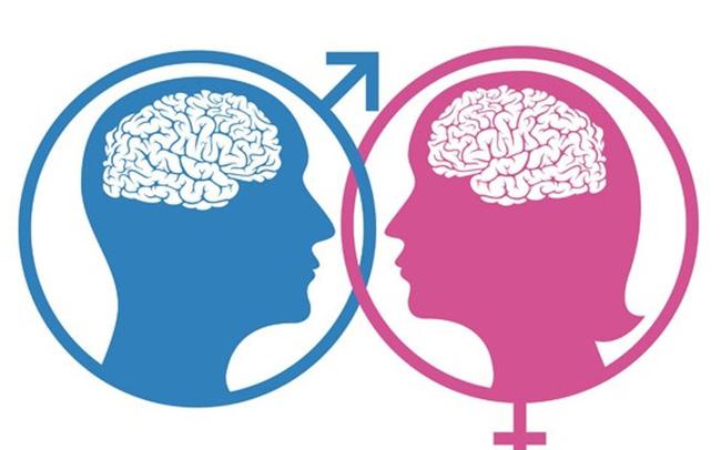 Não bộ của nam giới và nữ giới có khác nhau không? - ảnh 3