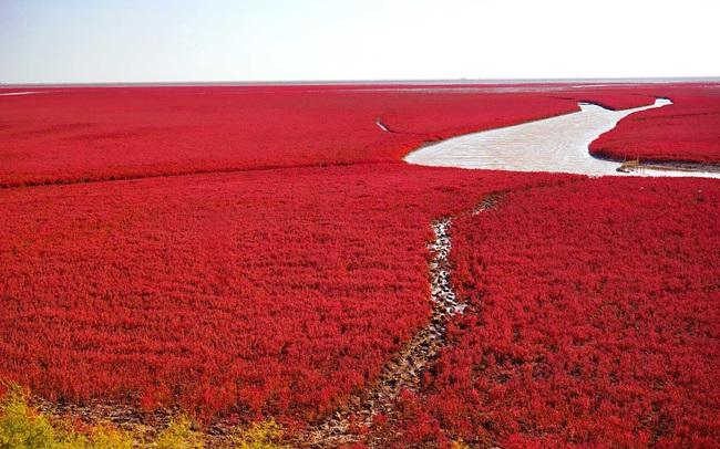 """Ngất ngây, vẻ đẹp mê hoặc du khách của vùng """"biển đỏ"""" (Trung Quốc) - ảnh 3"""