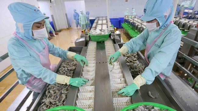 Processing shrimps for export (Photo: VNA)
