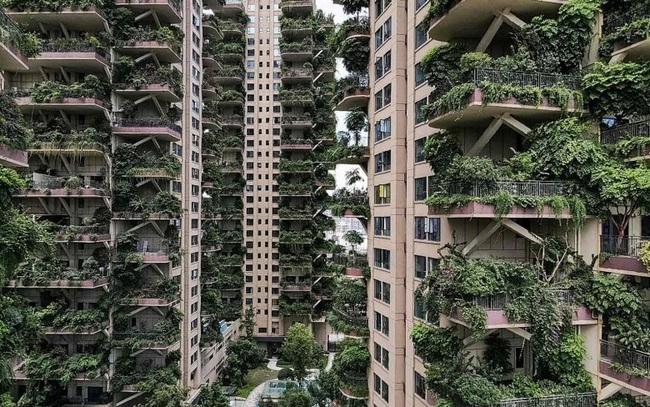 """""""Thiên đường"""" sinh thái đô thị bị bỏ hoang vì nhiều muỗi - ảnh 4"""