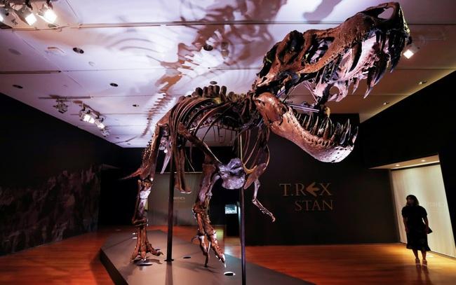 Bộ xương khủng long bạo chúa lớn nhất thế giới ra đấu giá - ảnh 3