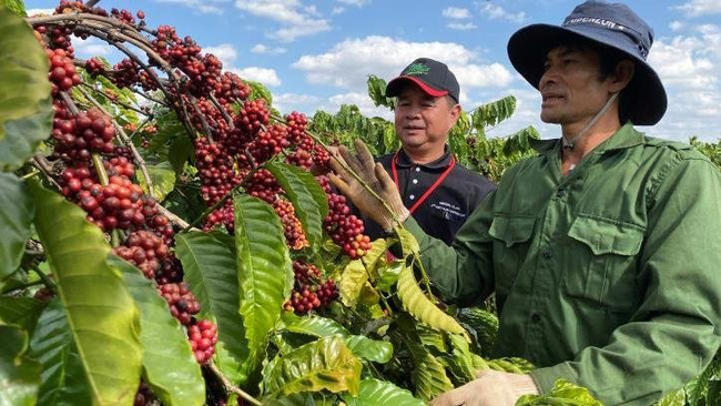 Vietnamese coffee has been shipped to 80 countries and territories, with revenue amounting to US$2.85 billion in 2019. (Photo: VNA)