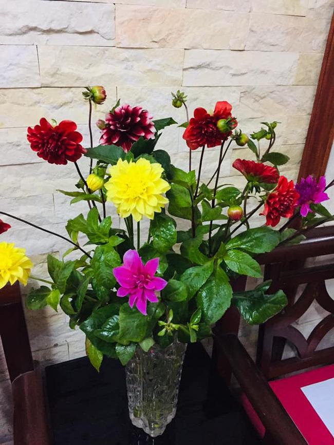 Những loại hoa chơi Tết dành cho... nhà nghèo - ảnh 12