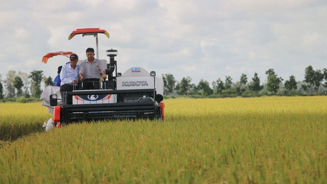 A rice field in An Giang Province (Photo: VNA)