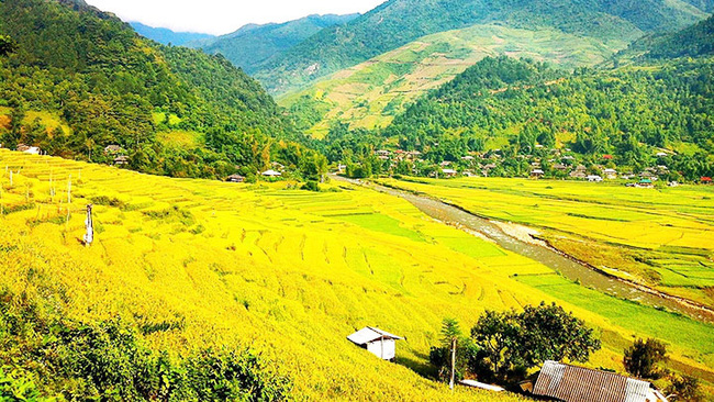Rice paddies in Tu Le Valley bask in the golden glow of autumn (Photo: My Hanh)