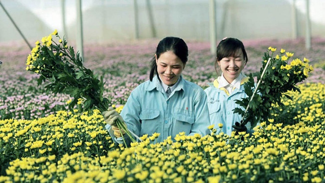 Lam Dong provincial authorities have put forward many policies to facilitate agricultural based tourism development (Photo: NDO/Tien Anh)