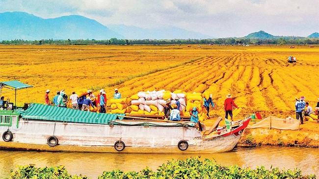 Rice harvesting in Long Xuyen Quadrangle. (Photo: Thanh Tung)