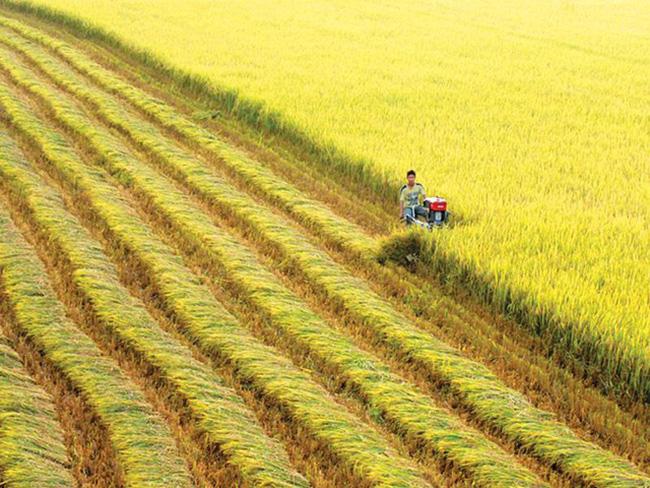 Thủ tướng đồng ý chuyển mục đích sử dụng 21,17ha đất trồng lúa tại Cần Thơ - ảnh 2