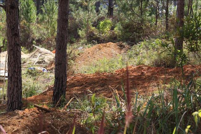Phạt 40 triệu với đối tượng lấn chiếm đất rừng phòng hộ ở Lâm Đồng - ảnh 1