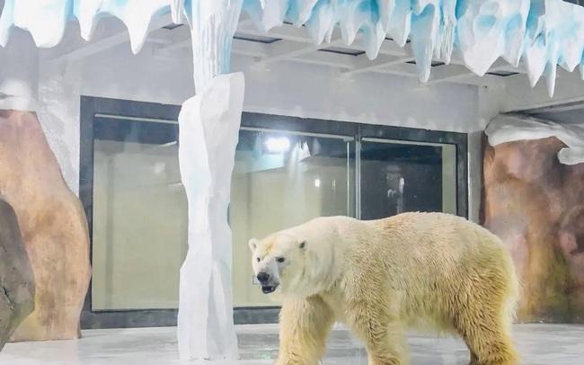 Độc đáo, khách sạn gấu Bắc Cực khai trương ở Trung Quốc - ảnh 6