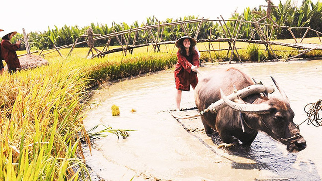 Hoi An offers unique farming experience (Photo: DOAN NGUYEN)