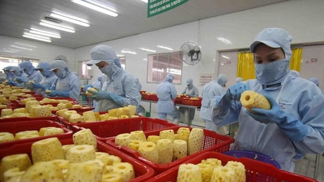 Pine apples processed for exports (Photo: VNA)