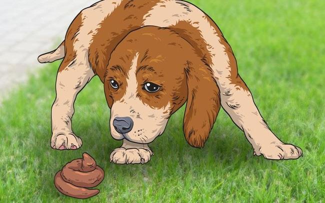 Giải mã 7 hành vi kỳ lạ hay gặp ở cún cưng - ảnh 8