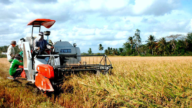 Farmers harvest rice in the Mekong Delta city of Can Tho. (Photo: NDO/Thanh Tam)