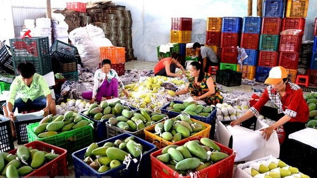Vietnamese agricultural products have been affirming their status in markets with high quality requirements. (Photo: VNA)