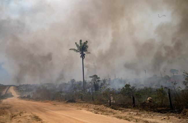 Rừng Amazon thải nhiều carbon hơn lượng khí thải hấp thụ - ảnh 3