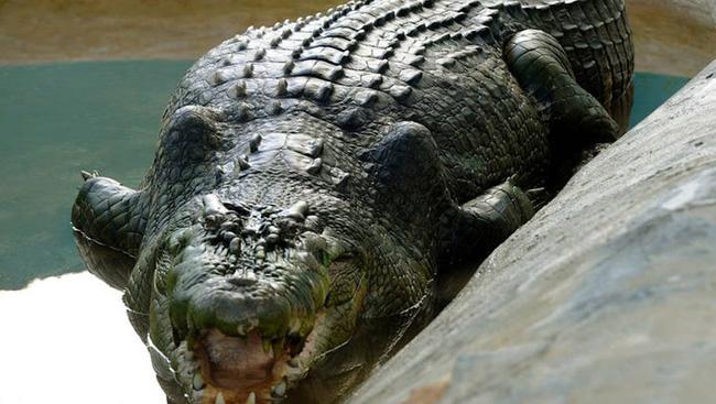 Cá sấu tiền sử khủng dài tới 7 m từng sống tại Australia - ảnh 3