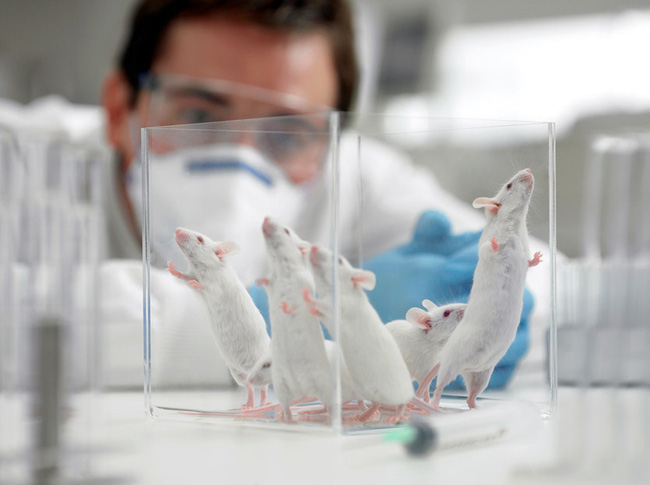 Israel tăng 23% tuổi thọ của chuột, điều tương tự có thể xảy ra đối với con người? - ảnh 2
