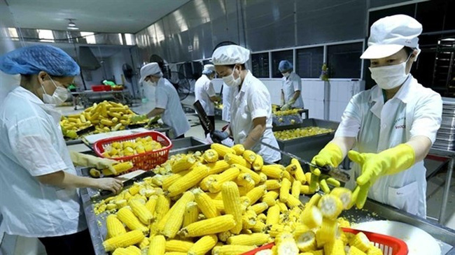 At a fruit processing plant in the Mekong Delta (Photo: VNA)