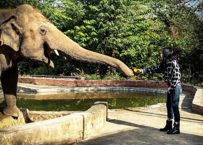 Nuôi nhốt voi trong vườn thú có thể bị coi là bất hợp pháp tại Anh - ảnh 3