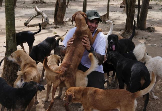 Chó có khả năng hiểu người bẩm sinh, nhưng chó sói thì không - ảnh 3