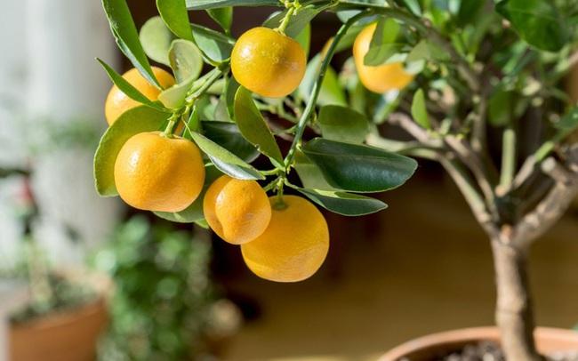Không cần mua hoa quả tích trữ, bạn có thể trồng những trái cây này tại nhà - ảnh 9