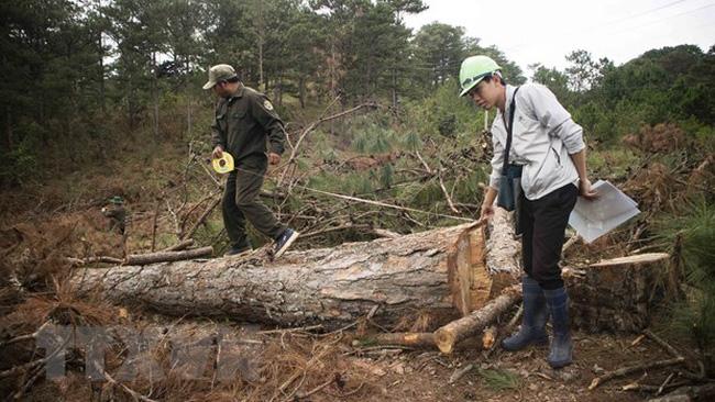 Khởi tố vụ án, khởi tố bị can vụ phá rừng nguyên sinh ở Lâm Đồng - ảnh 1