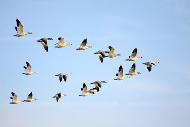 Yếu tố cần thiết giúp các loài di cư thích ứng với biến đổi khí hậu - ảnh 1