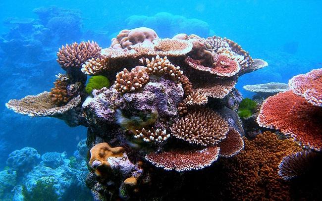 Siêu dự án Dubai lên kế hoạch tạo ra rạn san hô khổng lồ - ảnh 3