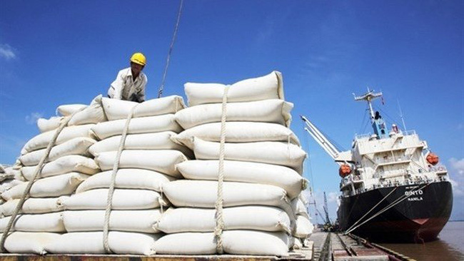 Rice is a potential item for Vietnam to export to the Italian market. (Photo baochinhphu.vn)