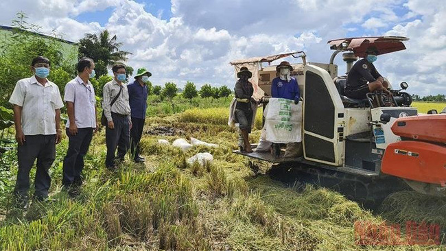 Leaders of Thap Muoi district survey rice harvesting in Tan Kieu commune. (Photo: NDO)