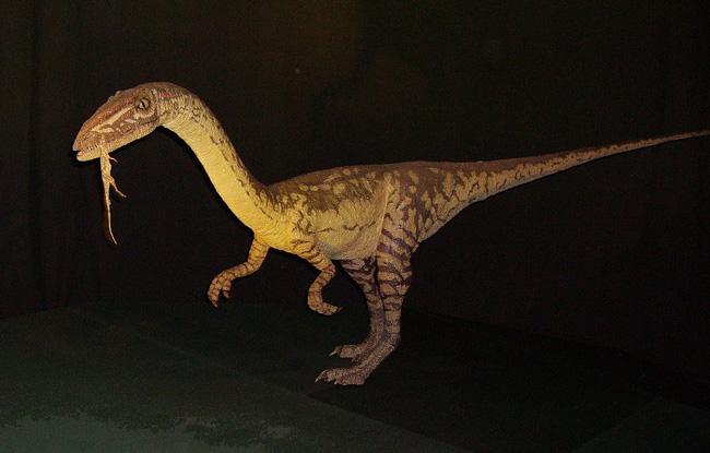 Chiếc đuôi dài giúp khủng long hai chân Coelophysis... chạy nhanh hơn - ảnh 3