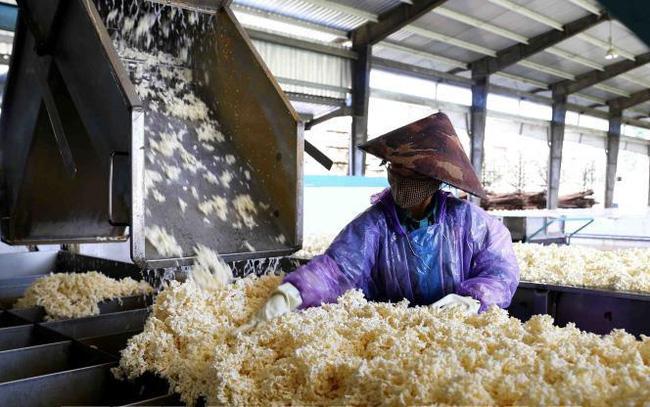 Hoa Kỳ tăng nhập khẩu cao su từ Việt Nam - ảnh 1