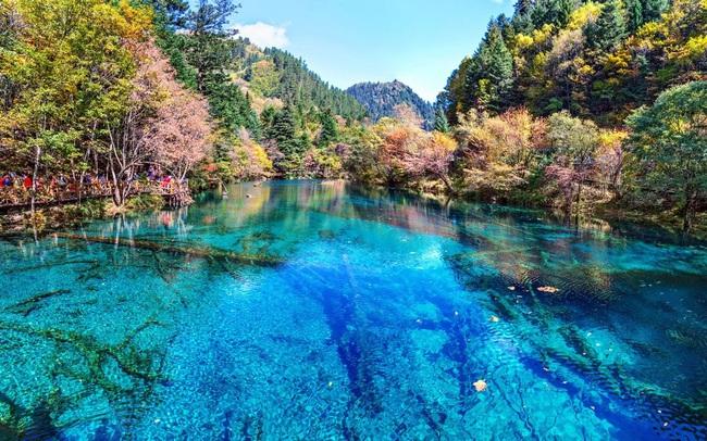 7 khu rừng ấn tượng  đẹp hút hồn du khách - ảnh 8