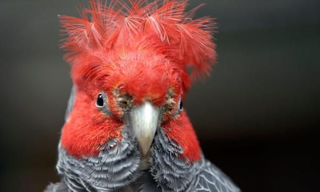 Động vật thay đổi hình dạng để ứng phó với khủng hoảng khí hậu - ảnh 4