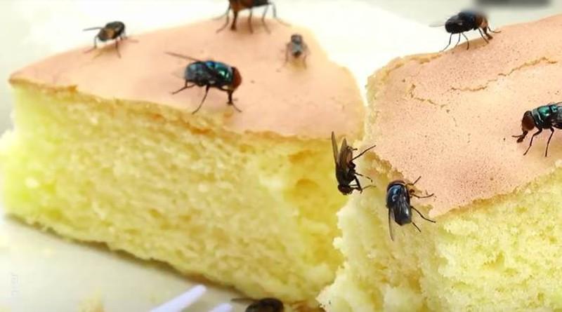 ruồi loài động vật ăn tạp