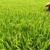 New climate-resilient models in Mekong delta
