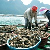 Sustainable aquatic farming promoted in Quang Ninh