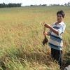 High tech needed to improve quality of Vietnam farming