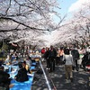 Warmer weather brings crowds to Tokyo cherry blossoms spots earlier than usual