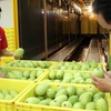 Vietnam earns 13 million USD from fruit and veg exports each day as Tet nears