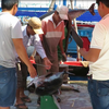 Phu Yen implements solutions to illegal fishing