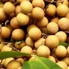 Trade promotions for Hung Yen's longan