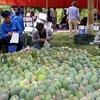Son La mangoes set foot in demanding markets