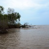 Improving the protection of dikes in Ca Mau