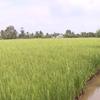 Hau Giang to face salinity