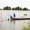 Flooding season arrives late in Mekong Delta